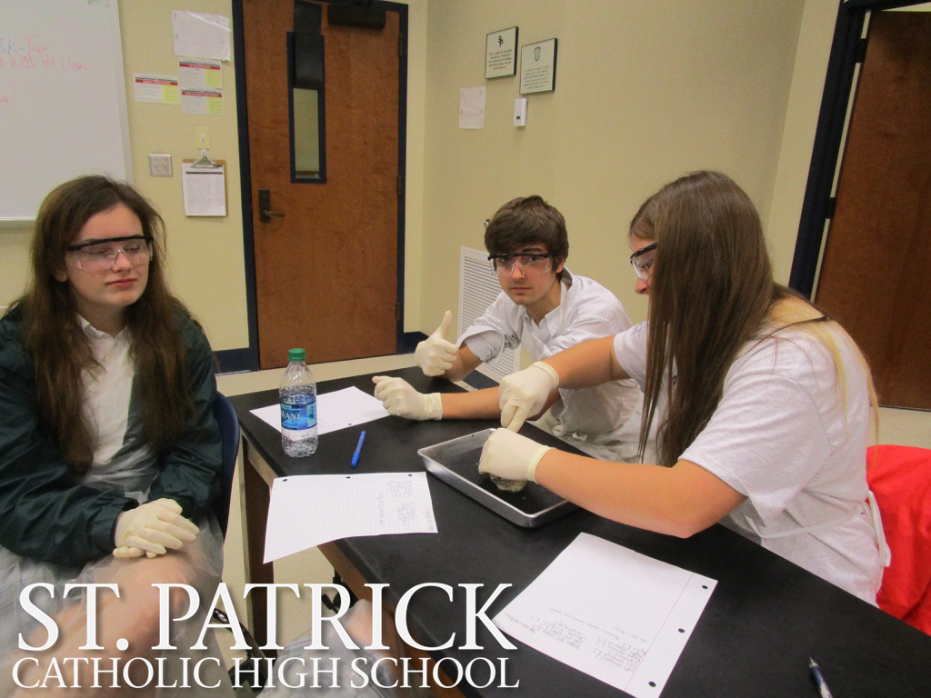 Anatomy Sheep Heart Lab | St. Patrick Catholic High School